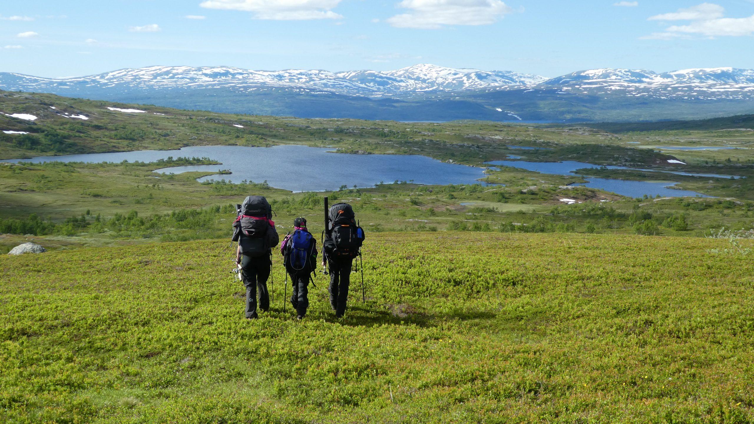 Børgefjell National Park photo: Tore Tødås