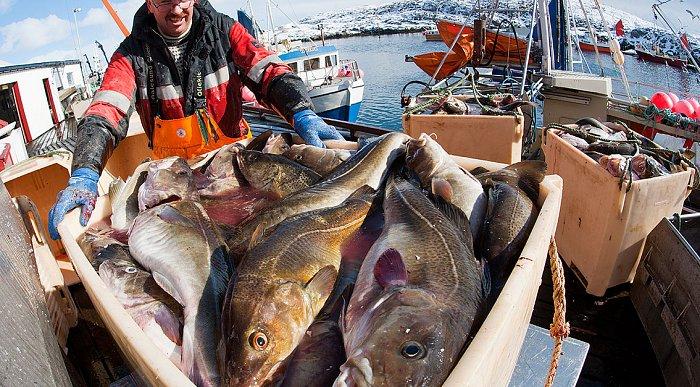 Fishing on the Namdal coast