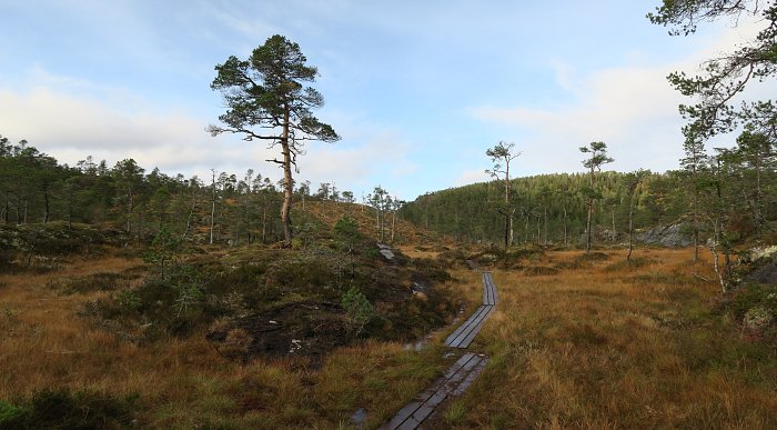 Hikes close to Namsos, photo of two people walking on a gravel road in Spillumsmarka.